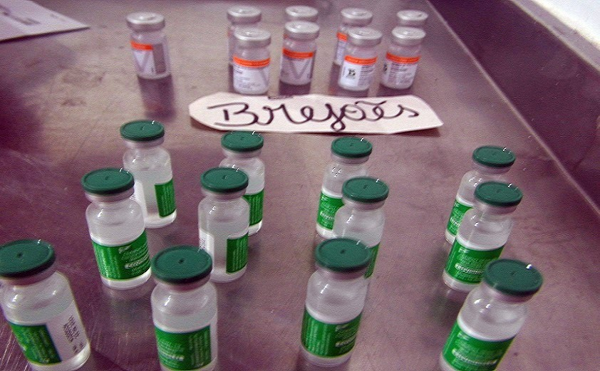Frascos de vacina contra Covid-19 têm quantidade menor de doses em Brejões e mais 31 cidades da Bahia.