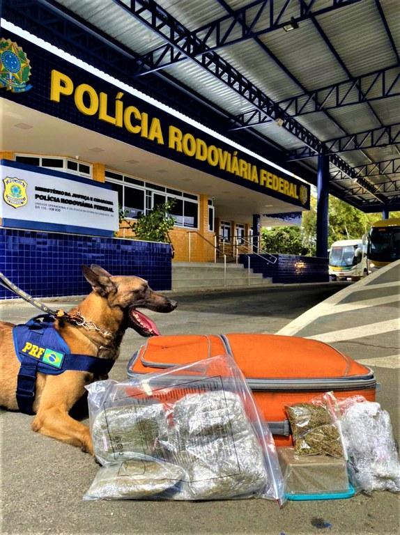 PRF apreende maconha com auxílio de cão farejador em Vitória da Conquista