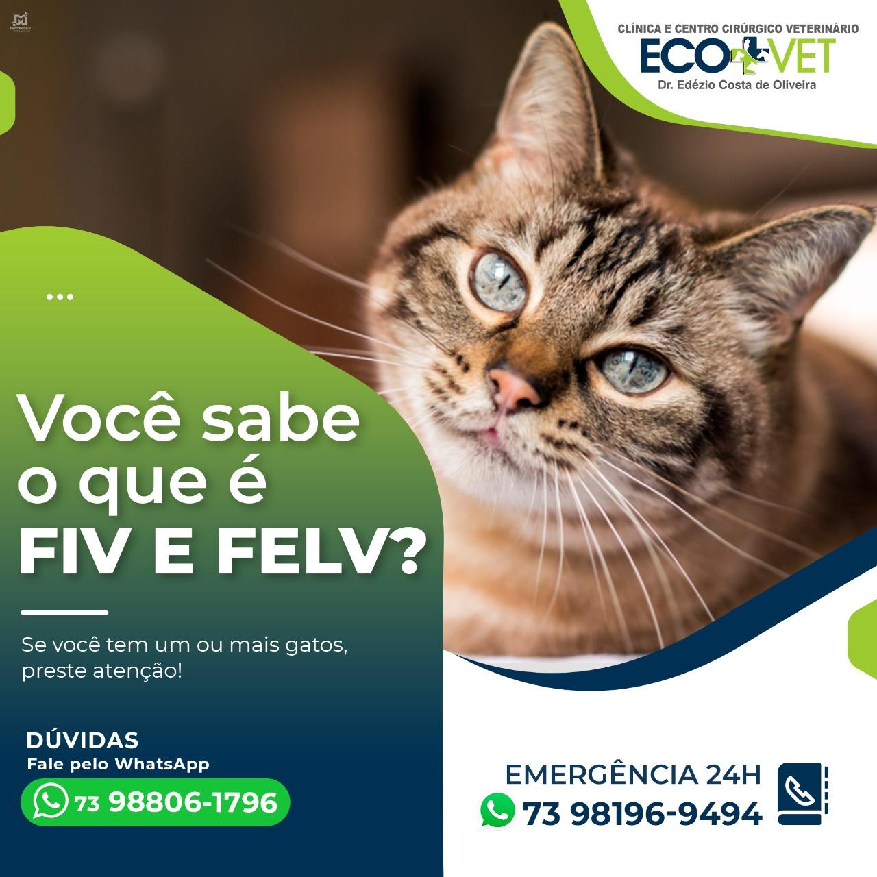 Ecovet:  Você sabe o que é FIV E FELV?   Se você tem um ou mais gatos, preste atenção!